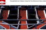 Modernization of a Manufactured Tomato Elaboration Company